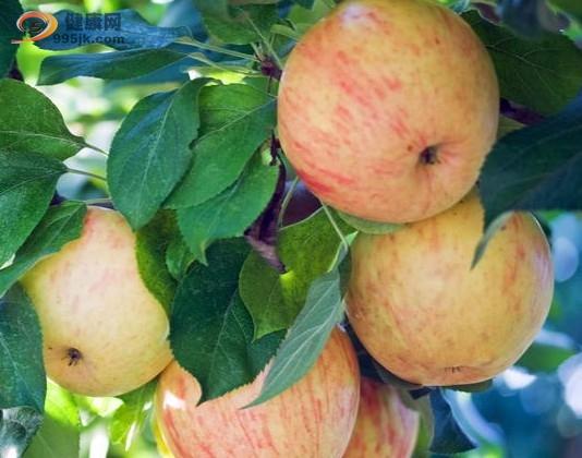一天一个苹果,让癌症离自己远一点
