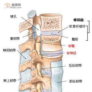 你吻合以下脊髓炎症状吗?