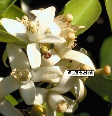 植物护肤品界的五大名花