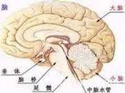 脑垂体瘤的症状?