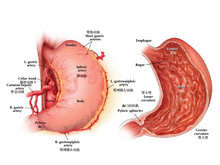 胃癌能治好吗怎么治疗?