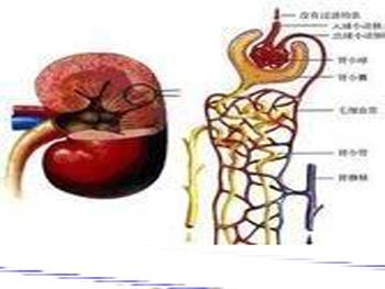 急性肾衰竭并发症和护理