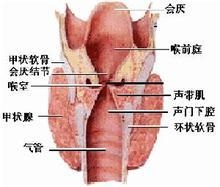 怎样辨别喉癌症状?
