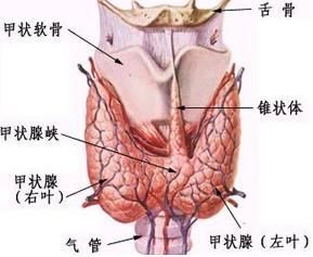 甲状腺髓样癌如何治疗