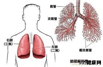 肺鳞癌晚期患者肺部会积水吗?