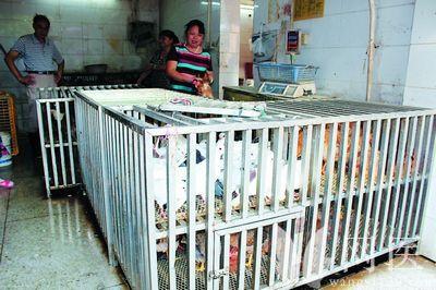 禽流感来势凶凶,该如何补充营养预防